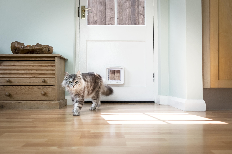 SureFlap_DualScan_Microchip_Cat_Flap_Dumbledore_Walking_Away_Wooden_Door