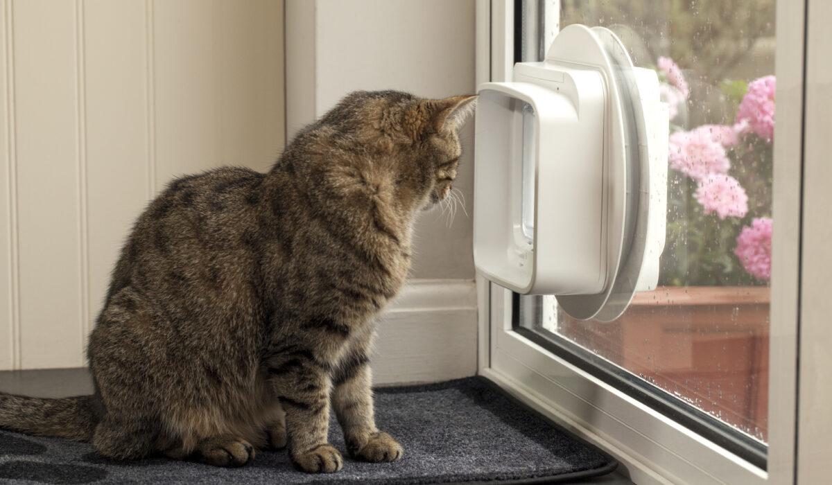 SureFlap_DualScan_Microchip_Cat_Flap_Hoshi_Looking_Out_Glass