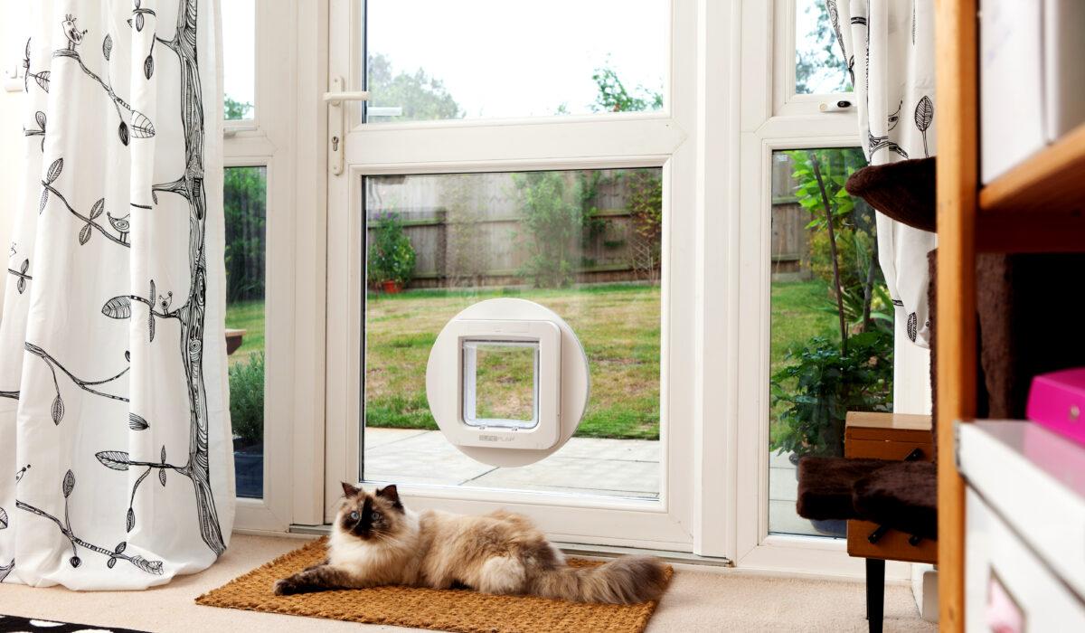 SureFlap_Microchip_Pet_Door_Lucy_Lying_Inside_Glass