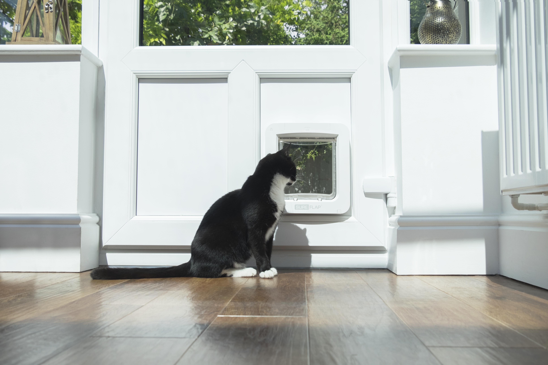 Sure_Petcare_Pet_Door_Connect_Clara_Looking_Out