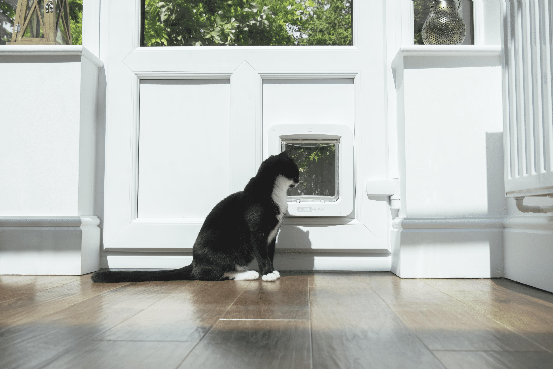 sure_petcare_pet_door_connect_clara_looking_out_optimized