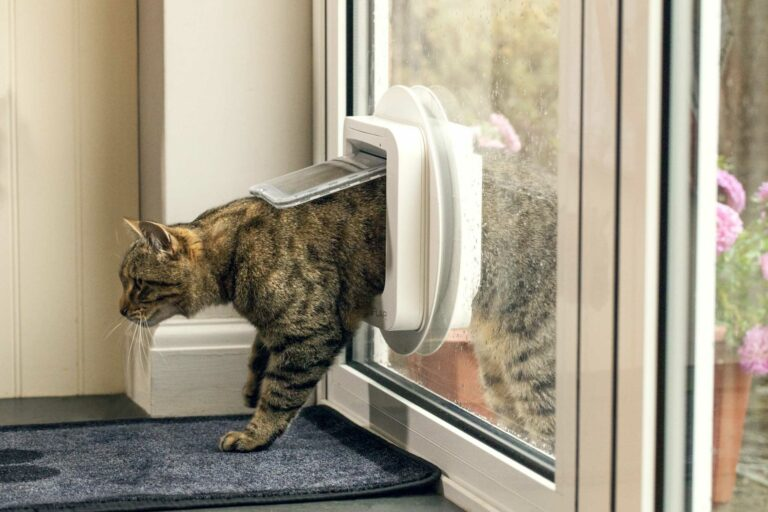 sureflap_microchip_cat_flap_side_on_glass-scaled-2_optimized